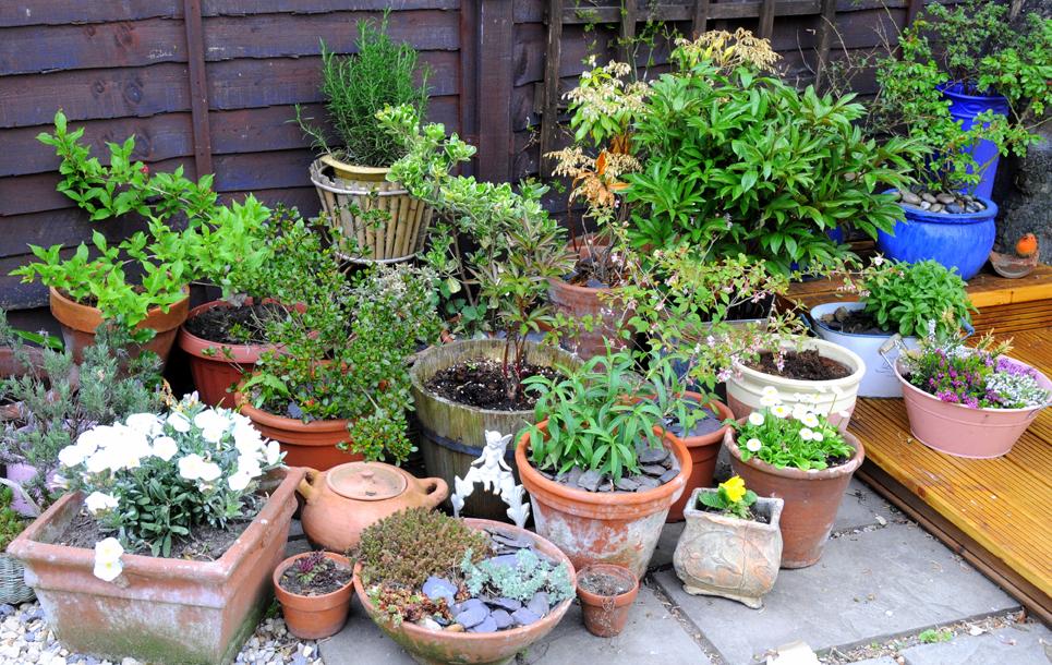 mixed terra cotta pots