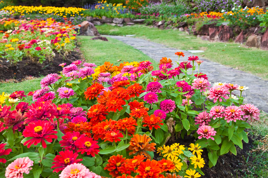 Tips and ideas for a great summer garden stoney creek for Low maintenance flowers outdoor